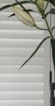 shutters-with-hidden-tilt_0